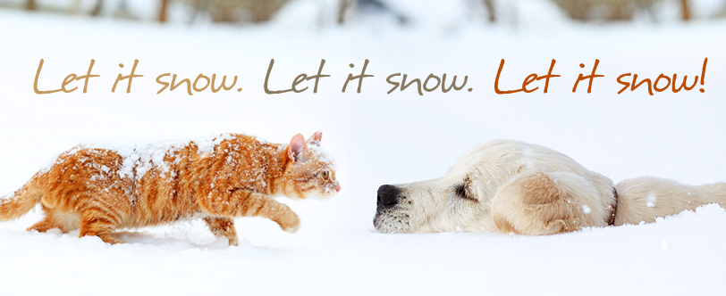 Let it snow dog and cat